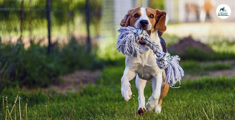 Vrai ou Faux : Avoir un jardin permet de diminuer les sorties de son chien