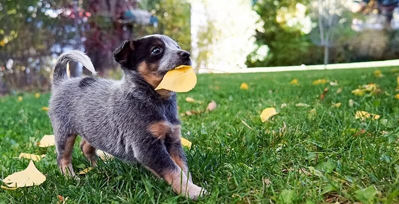 Mon chien mange n'importe quoi, que faire ?