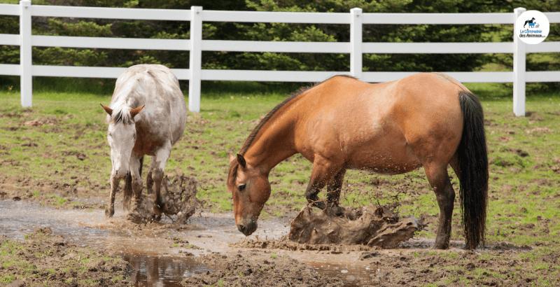 La gale de boue chez les chevaux