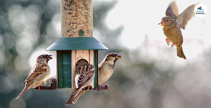 Comment transformer son jardin en refuge pour oiseaux ?