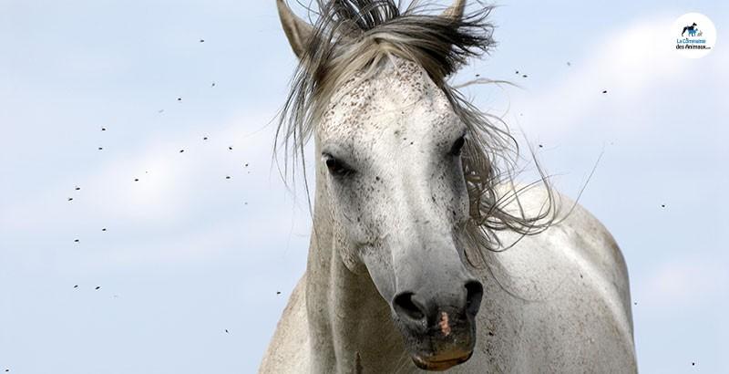 Comment protéger son cheval des mouches ?