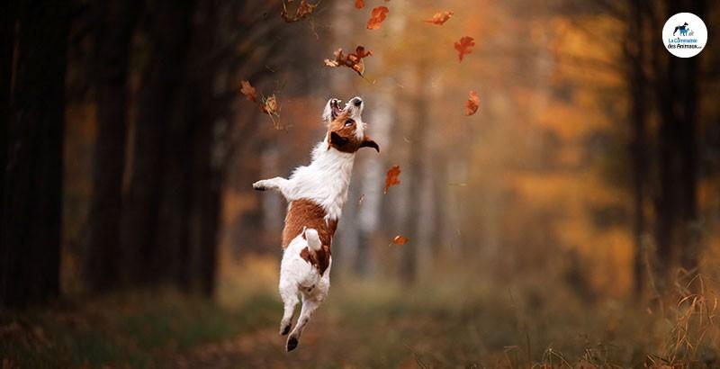 Quels sont les dangers de l'automne pour nos animaux ?