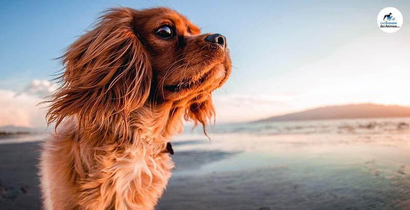 Comment apprendre un sport nautique à son chien ?