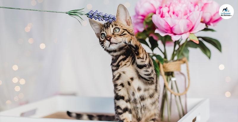 5 conseils pour bien éduquer son chaton