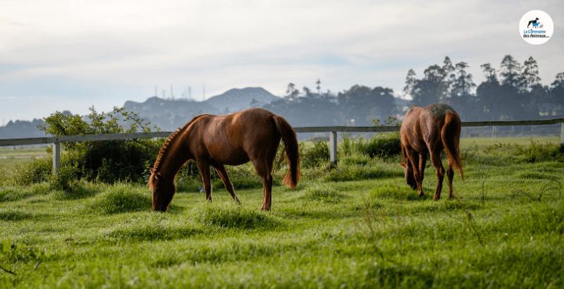Phytothérapie équine : Ce qu'il faut savoir sur les plantes médicinales pour chevaux