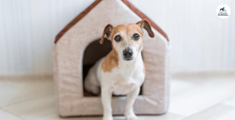 Quelle niche choisir pour son chien?
