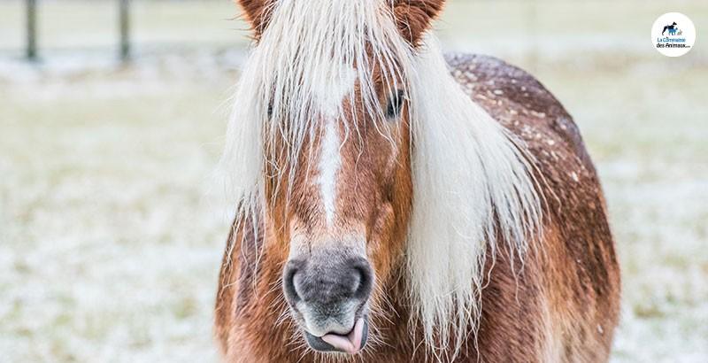 Quels sont les dangers du pâturage pour les chevaux ?