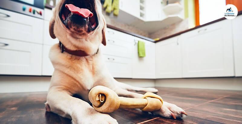 Quel os à mâcher choisir pour son chien ?