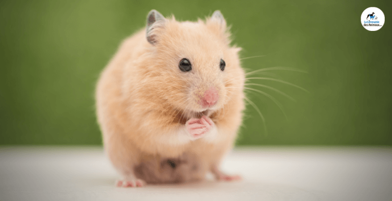 Nos conseils pour accueillir un ou plusieurs petits animaux chez soi ?