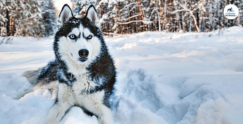 Emmener son chien aux sports d'hiver