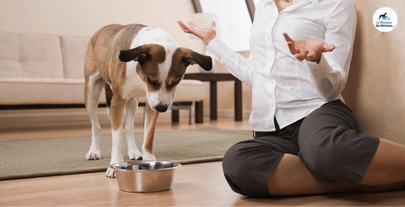 Mon chien boude sa gamelle : que faire ?