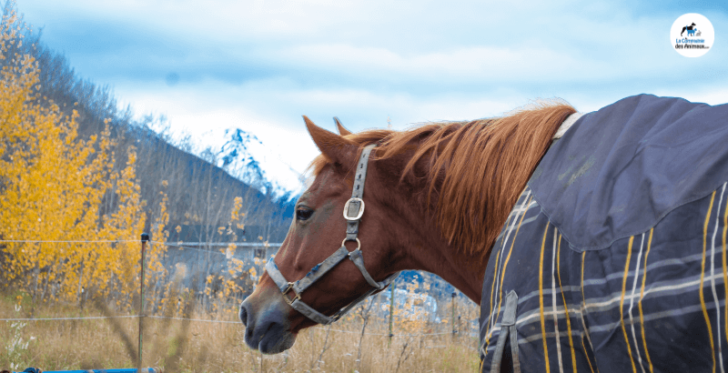 Manteaux, chemises, couvertures: Que choisir pour mon cheval ?