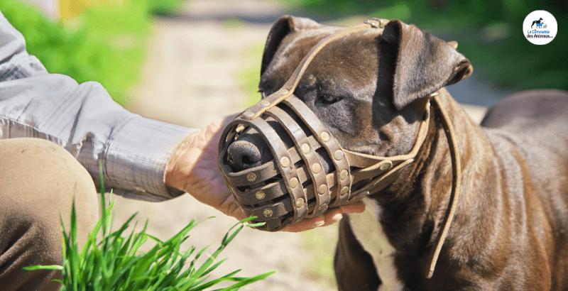 Quand utiliser une muselière pour chien et comment la choisir ?