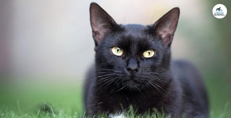 Votre chat sort ? Protégez-le : renforcez ses défenses immunitaires !