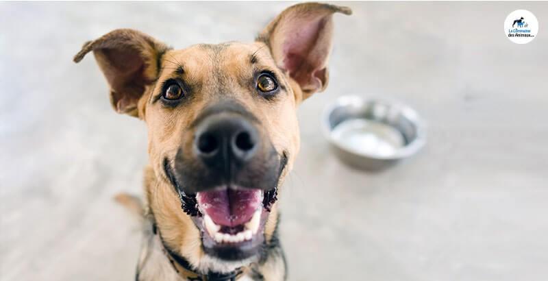 On a testé : La gamme HPM pour chien de Virbac
