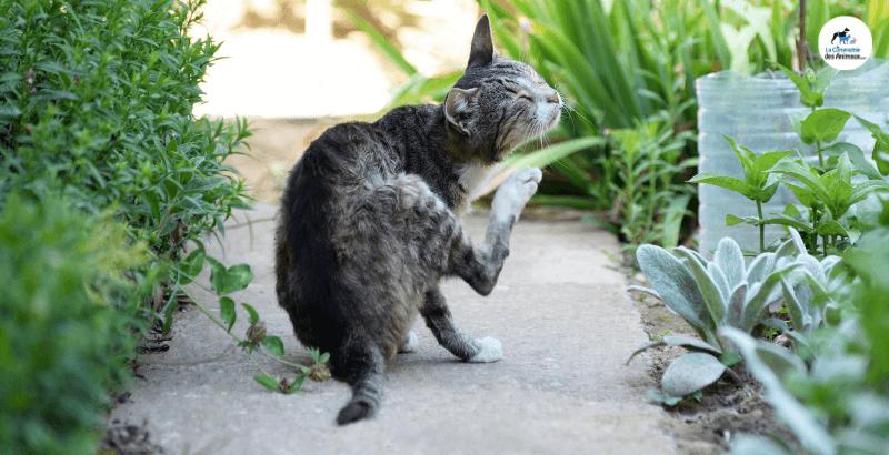 Comment choisir un collier Anti-puces pour chat ?