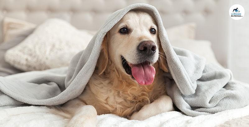 Comment prendre la température de son chien ?