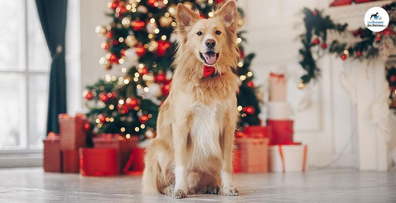 Nouvelle année : les bonnes résolutions à prendre pour votre chien