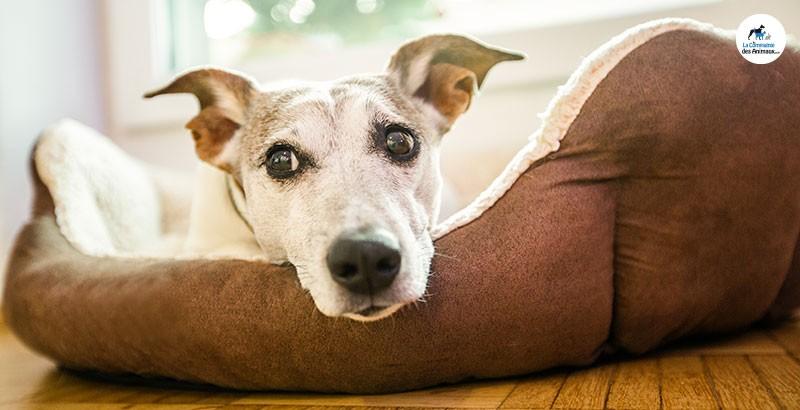 Comment aider son chien lorsqu'il a une diarrhée ?