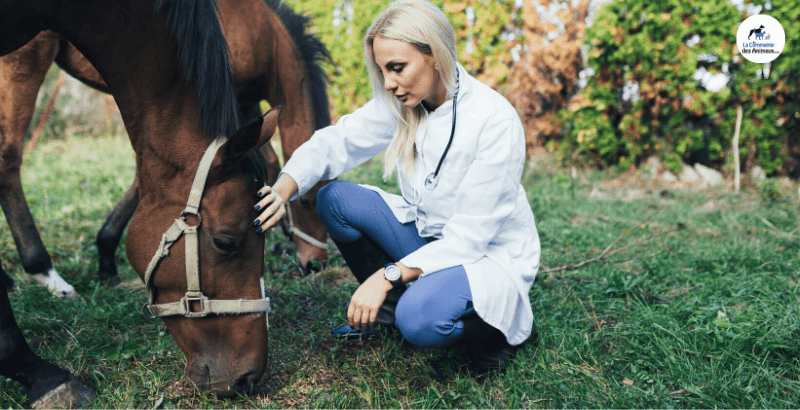 L'Emphysème chez le cheval