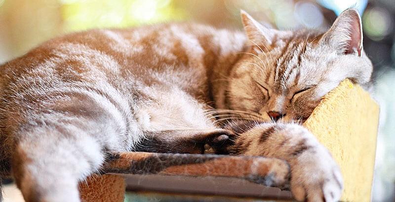 Comment bien choisir son arbre à chat ?