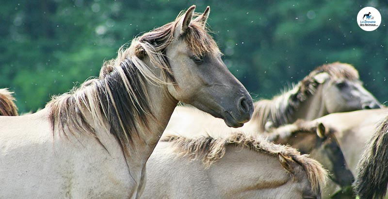 Utilisation de la gamme Equilfy pour chevaux
