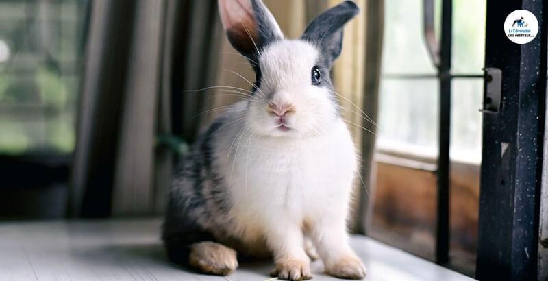 Que faire quand mon lapin tape du pied ?