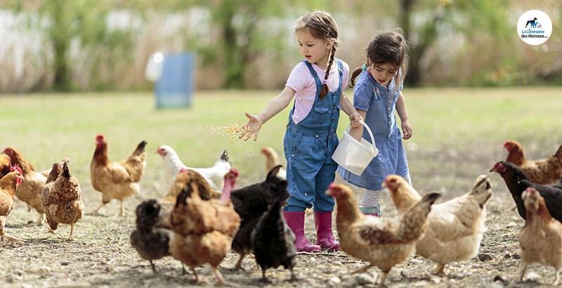 Quelles friandises pour les poules ?