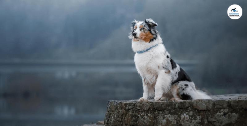 Quel collier GPS choisir pour son chien ?