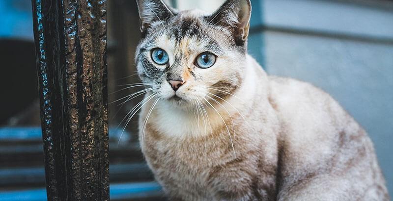 Vrai ou Faux : Les chats peuvent voir la nuit