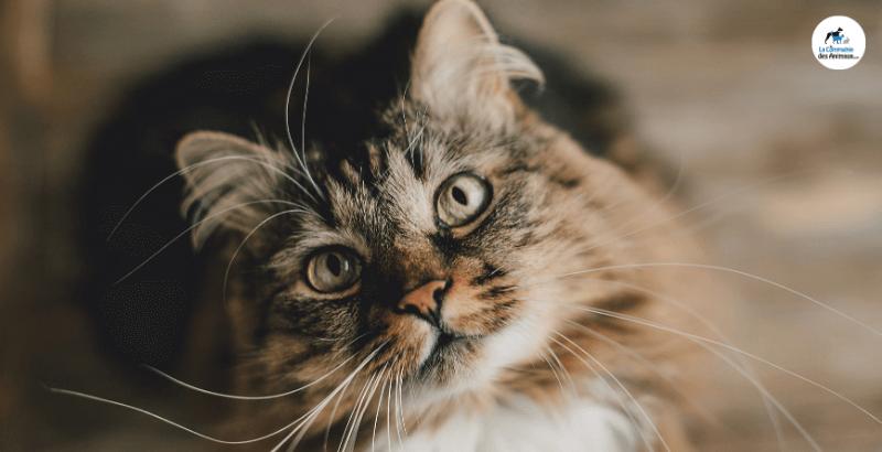 On a testé les Mijotés Healthy Cuisine de Hill's pour chat : un vrai délice !