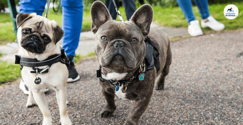 Harnais ou collier : Que choisir pour son chien ?