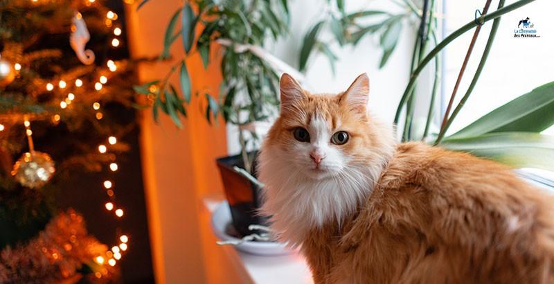 5 idées cadeaux pour que votre chat adore Noël