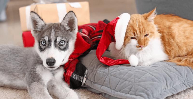 Quels sont les dangers de Noël pour votre animal ?