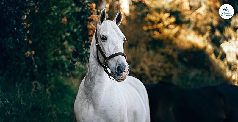 La Biotine, une vitamine très utilisée chez les chevaux