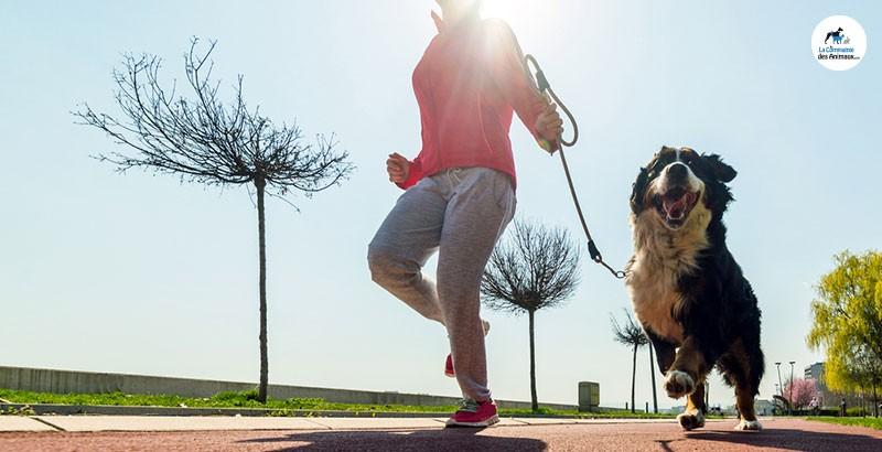 Arthrose : Comment aider votre animal avec Flexadin ?