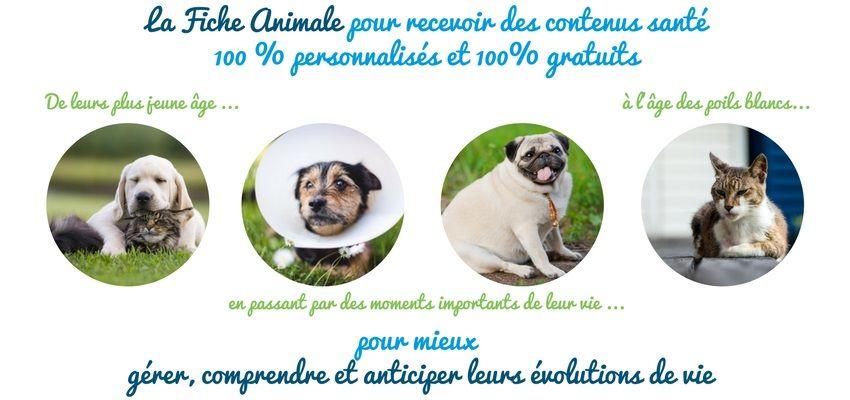 Découvrez la Fiche Animale de la Compagnie des Animaux