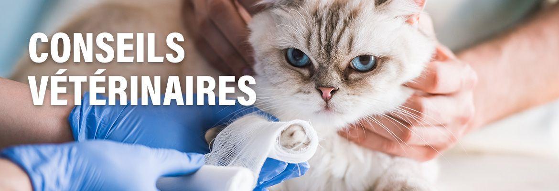 LaCie - Conseils Vétérinaires