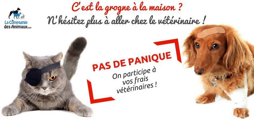 Opération La Compagnie des Animaux et Royal Canin