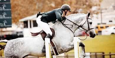 Phyto Respir & Confort respiratoire des chevaux