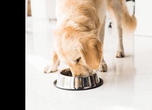 Comment choisir l'alimentation de son chien ?