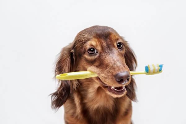Comment lutter contre la mauvaise haleine du chien ?