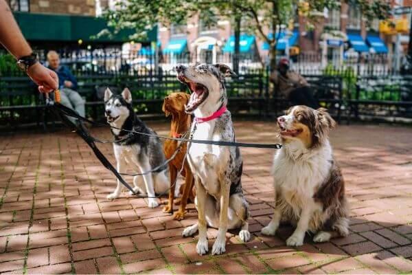 comment choisir son collier d'éducation pour chien