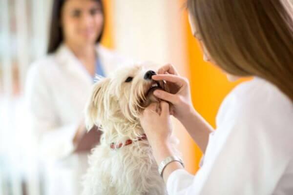 hygiène bucco-dentaire chien