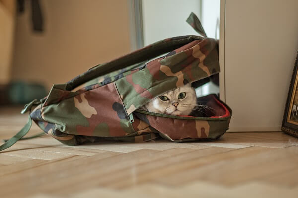 Choisir un sac de transport pour chat