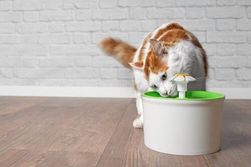 Comment choisir sa fontaine a eau pour chat