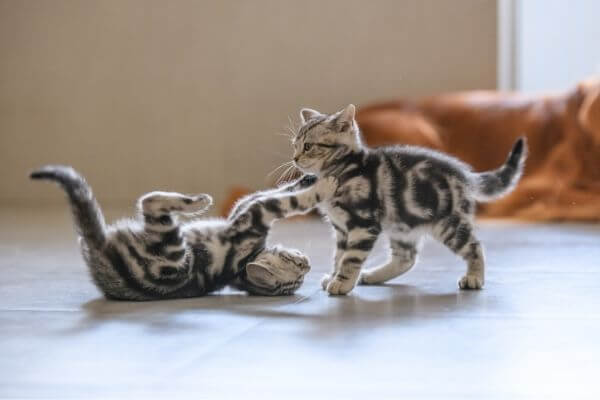 Comment choisir son jouet pour chat