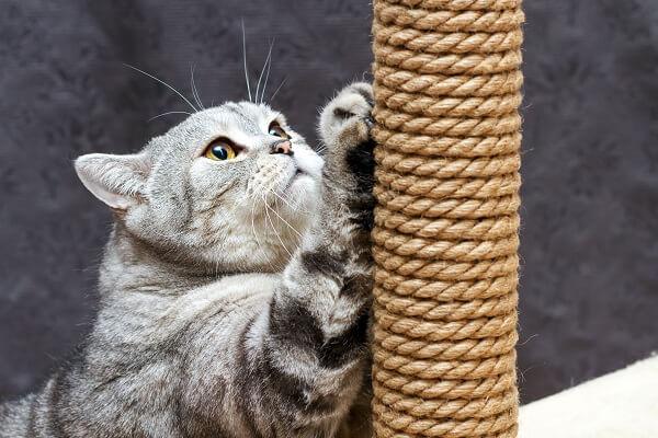 Comment choisir un Griffoir pour chat