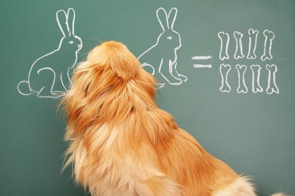 Comment faire du dentifrice pour chien maison