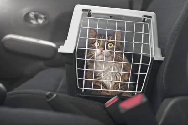 Comment gérer le stress du chat en voiture